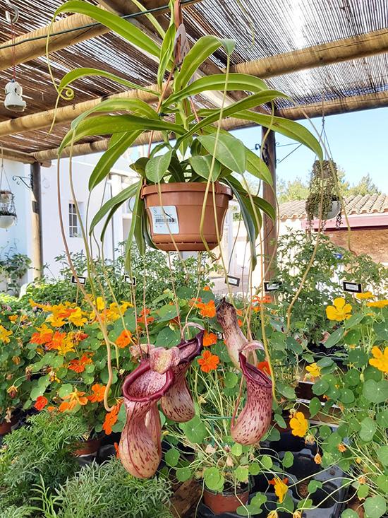 Plantas (101)
