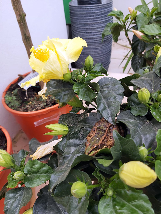 Plantas (144)