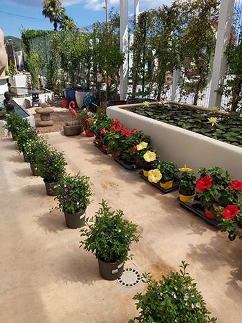 Plantas (161)