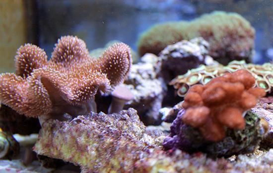 corales (10)