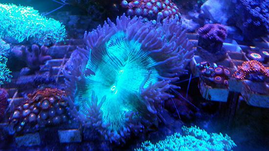 corales (101)