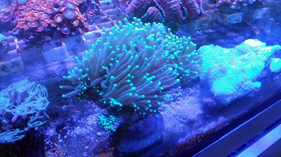 corales (102)