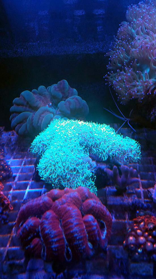 corales (104)