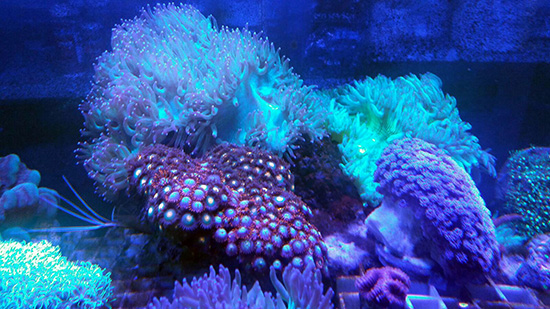corales (105)