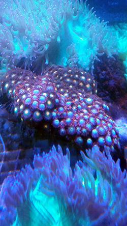 corales (106)