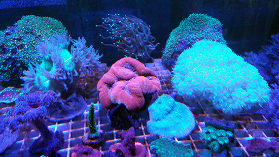 corales (107)
