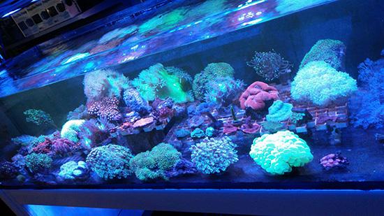 corales (108)