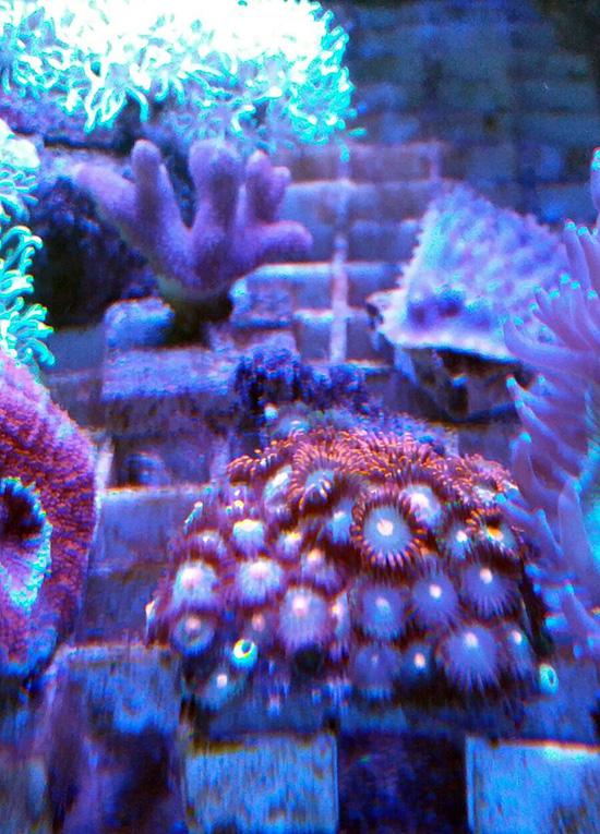 corales (109)