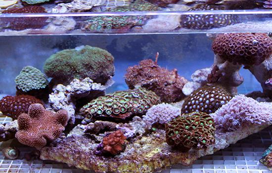 corales (11)