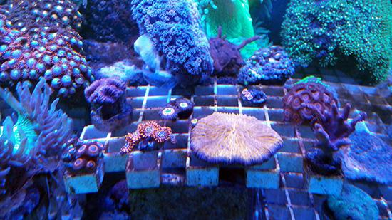 corales (110)