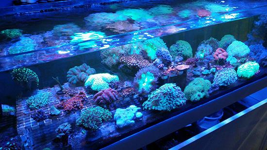 corales (112)