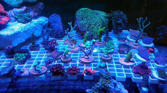 corales (113)