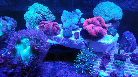 corales (114)