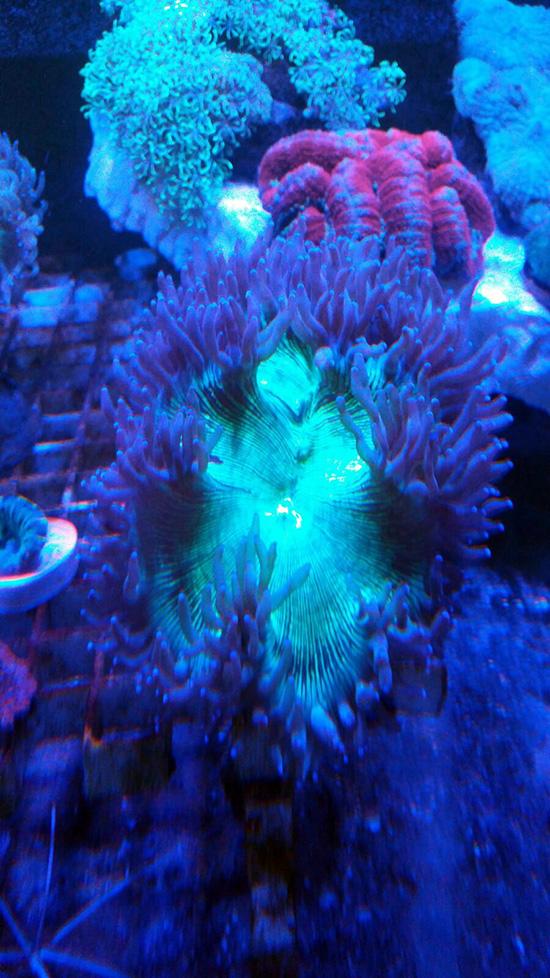 corales (115)