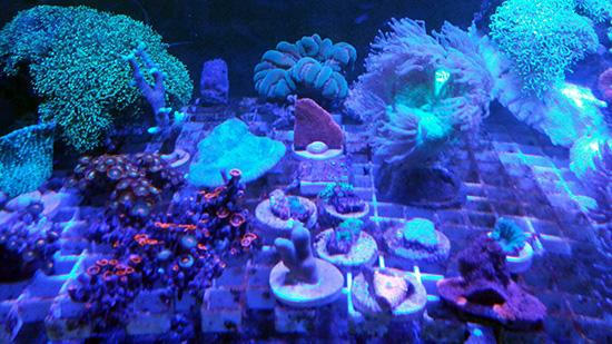 corales (116)