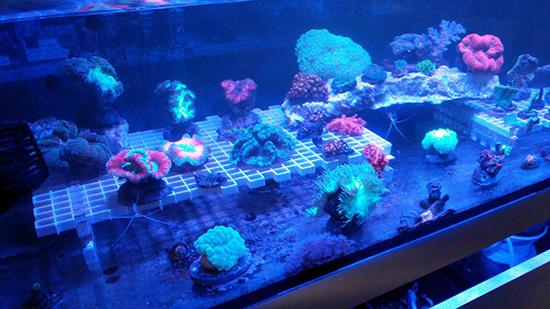 corales (117)