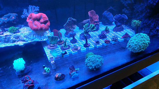 corales (118)