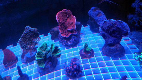 corales (119)