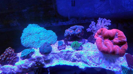 corales (120)