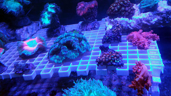 corales (121)