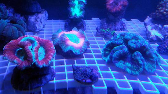 corales (122)