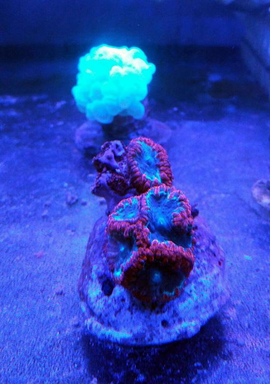 corales (123)