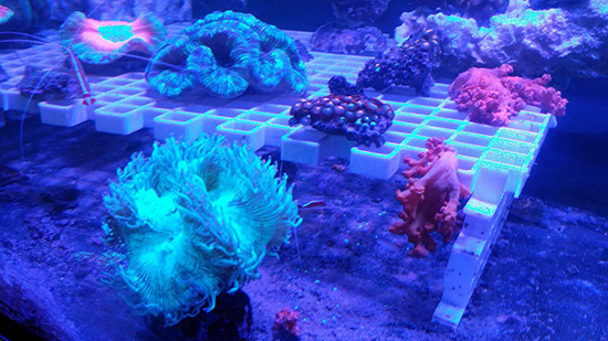 corales (124)