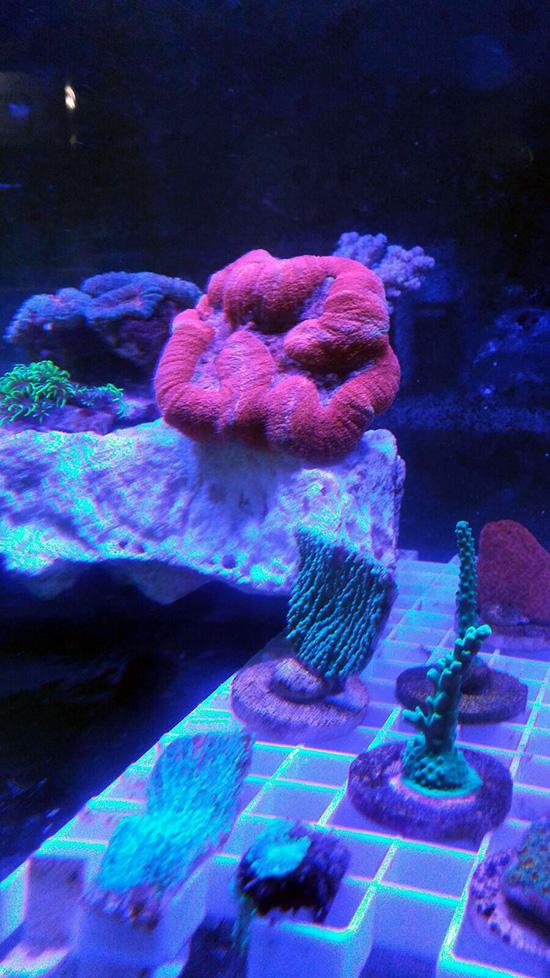 corales (125)