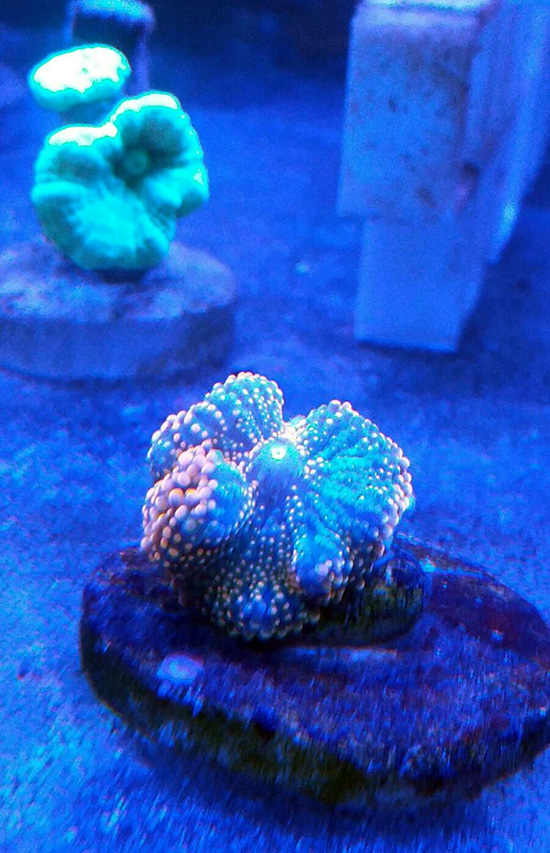 corales (126)