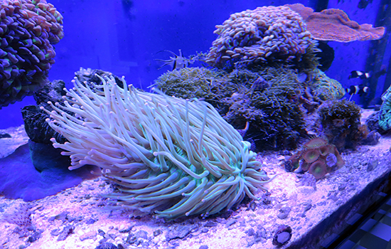 corales (14)