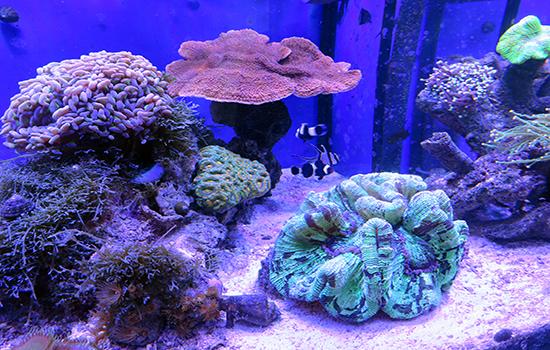 corales (15)