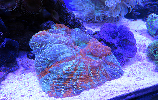 corales (16)