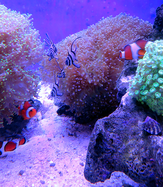 corales (18)
