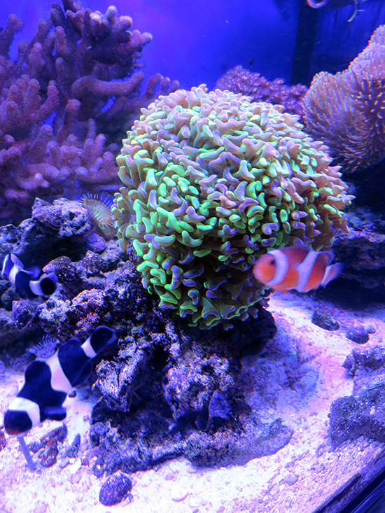 corales (19)