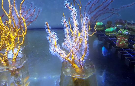 corales (2)