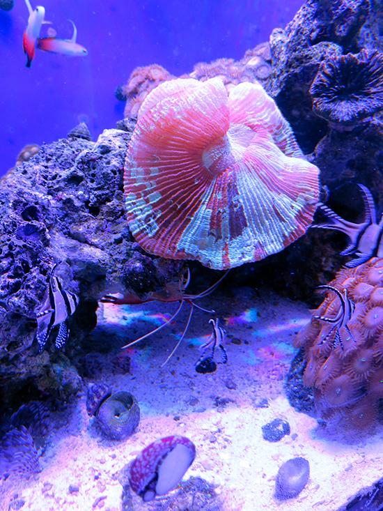 corales (20)