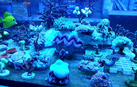 corales (22)