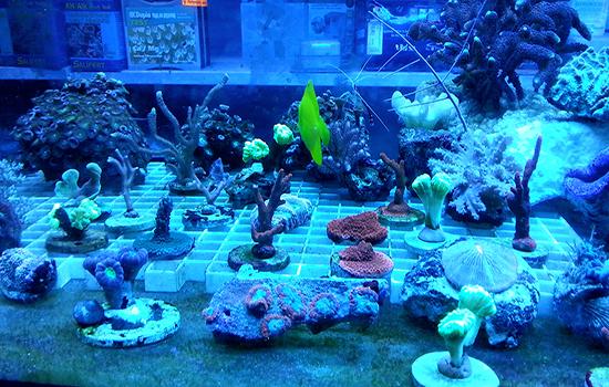corales (23)