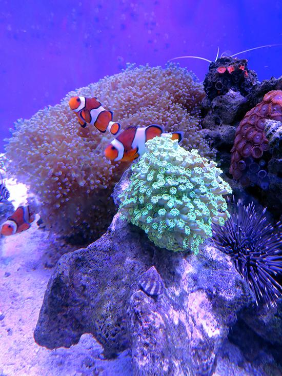 corales (25)
