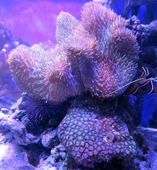 corales (27)