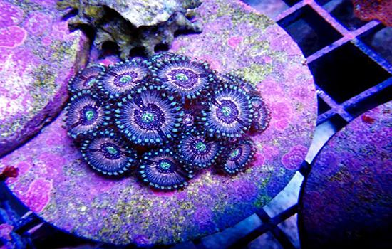 corales (28)