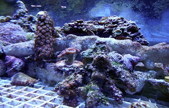 corales (29)