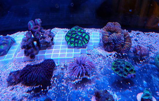 corales (3)