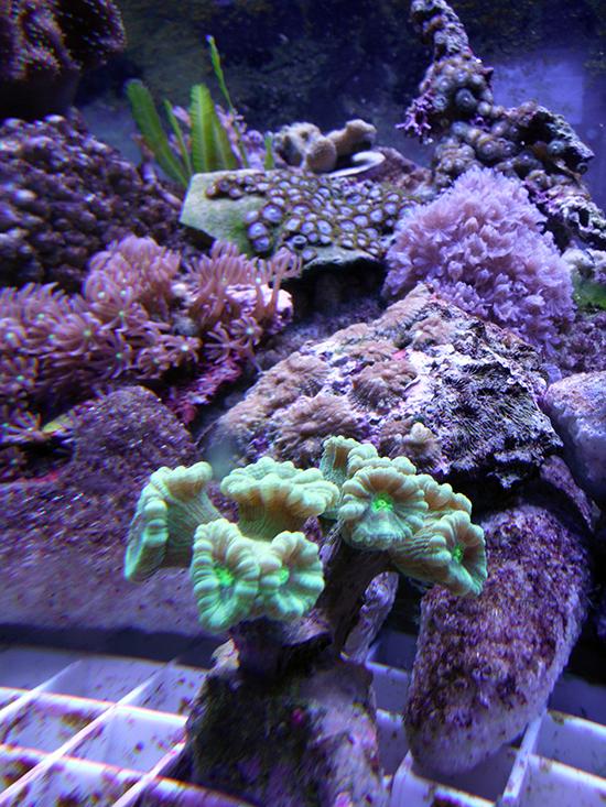 corales (30)