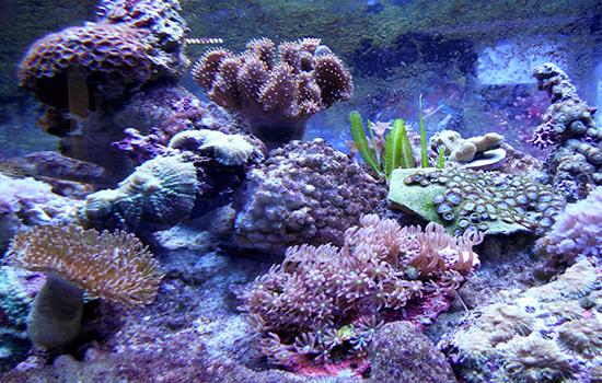 corales (31)