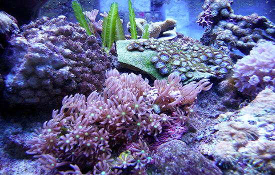 corales (32)