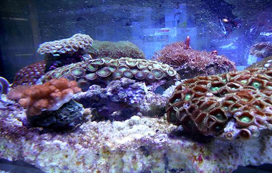 corales (33)