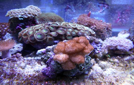 corales (35)