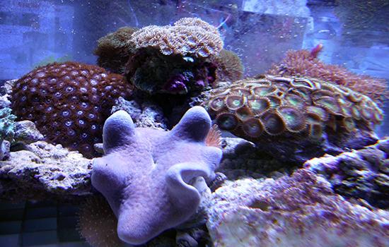 corales (36)