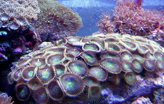 corales (37)